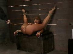 Curvaceous Ava Devine gets bonded and toyed in the ass tube porn video